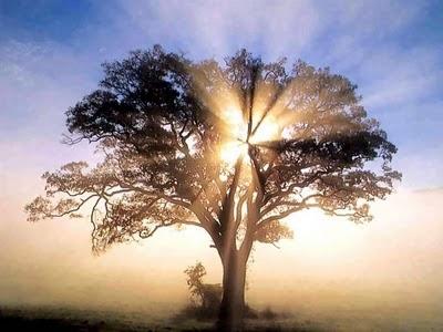 Light Tree Gaia Spirit