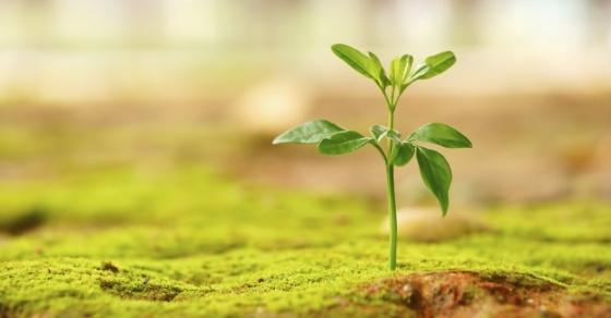 14857-new-life-plant-grow-green-hope-wide.1200w.tn