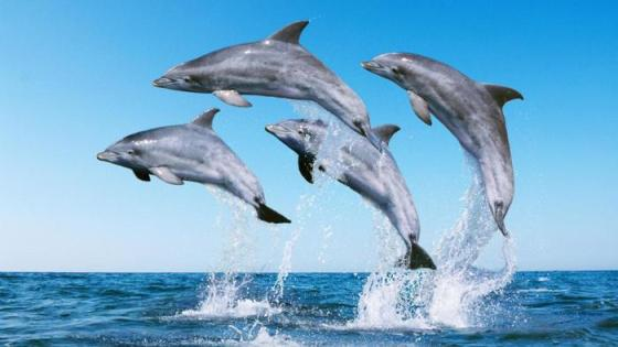 how-does-a-dolphin-protect-itself_ea9cec56533f614e