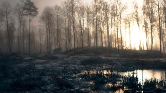 mystyforest